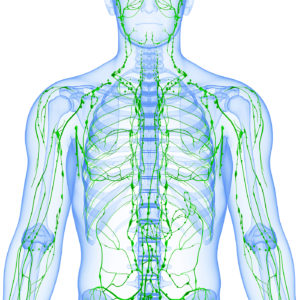 White Body Green Lymphatic Vessels