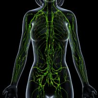 Woman Green Lymph Vessels Black Background