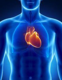 Human heart , heart disease