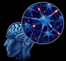 Brain Cell Neurons