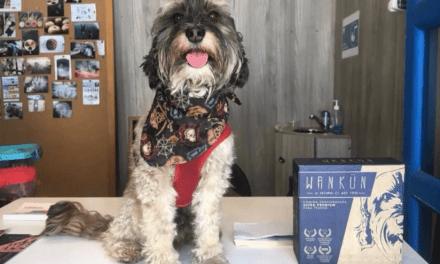 Producto en base a ingredientes naturales, sin químicos ni aditivos  ¿Cómo alimentar a tu perro de forma saludable?
