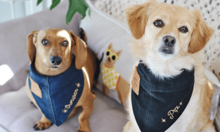 Aprende a hacer collares de jeans para mascotas en solo 6 pasos