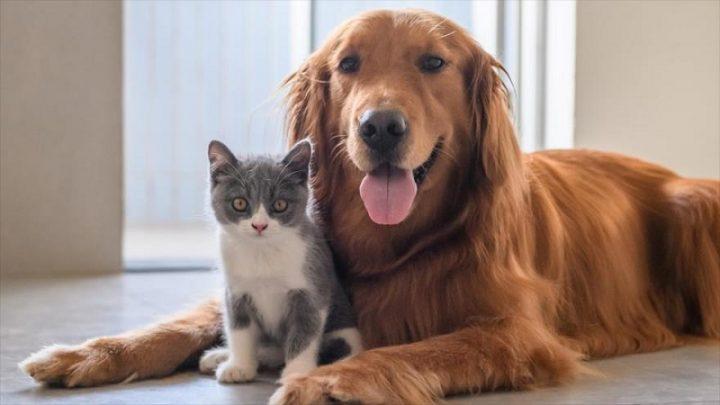 ¿Quieres reducir el estrés de tu mascota durante el confinamiento? Puppies & Kittens te ofrece 5 tips para lograrlo con éxito