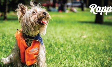 Los alimentos para perros lideran los pedidos en tiendas de mascotas de Rappi