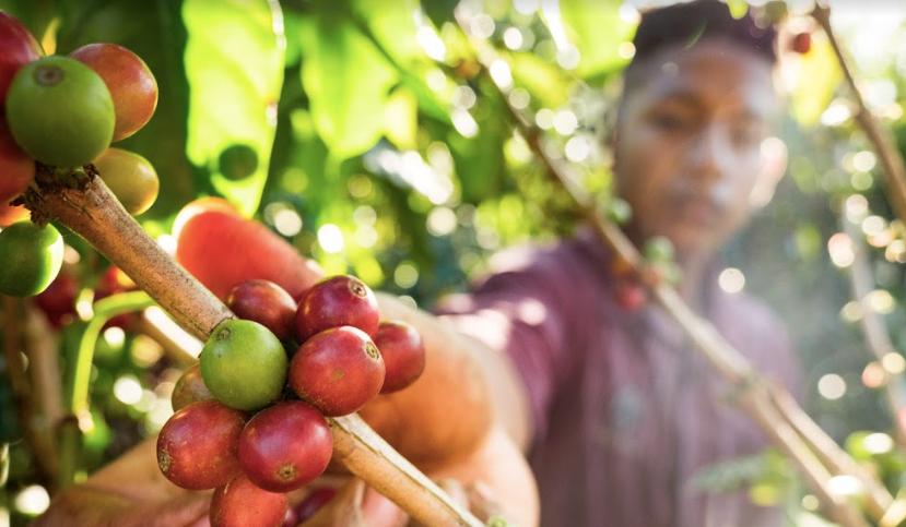 Accor Sudamérica expandirá su programa Plant for the Planet a las plantaciones de café en Colombia