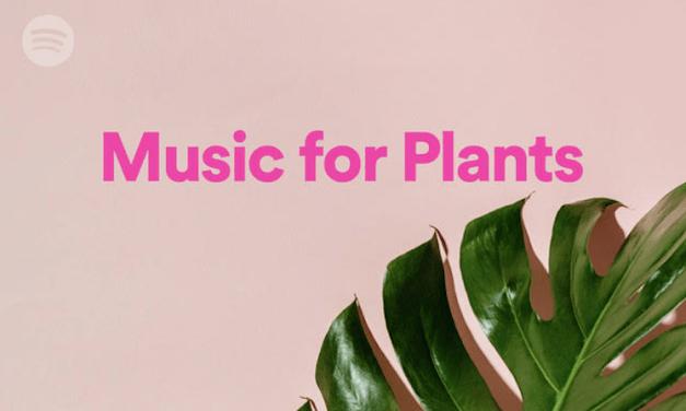 Spotify crea la primera colección curada especialmente para tus plant-hijas