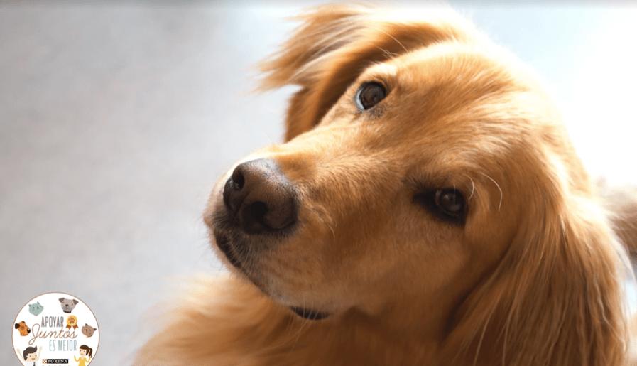 Nestlé Purina busca proyectos innovadores para mejorar la calidad de vida de las mascotas
