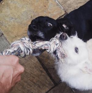 hotel-para-cachorro