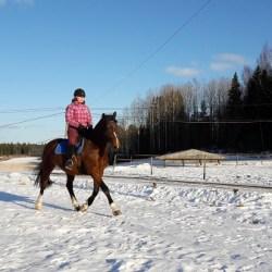 Hevosista monipuolinen harrastus tai jopa elämäntapa
