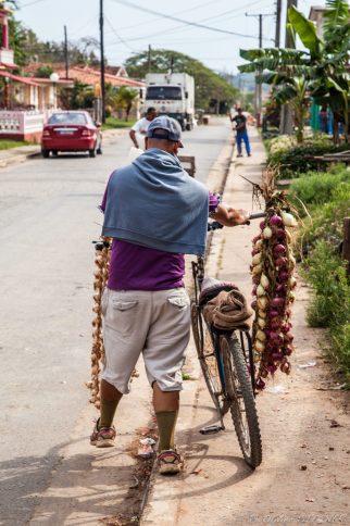 A regular day in Viñales