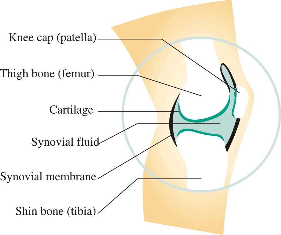 hight resolution of knee diagramme