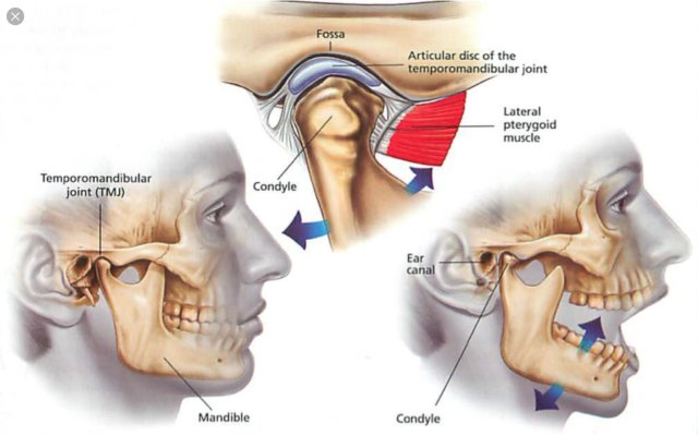 simonetta alibrandi osteopata movimento dell'articolazione temporo-mandibolare