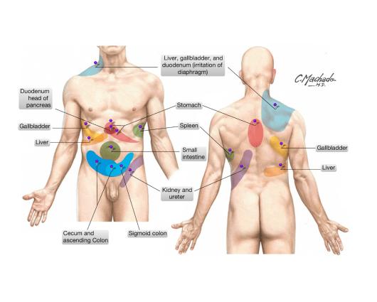 simonetta alibrandi osteopata dolore riferito visceri addominali