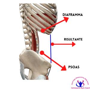 simonetta-alibrandi-osteopata-posturologo-personal-trainer-mal-di-schiena-diaframma-psoas-rimedi-esercizi-Mezieres-posture-Catena-principale-statica-anteriore-posteriore