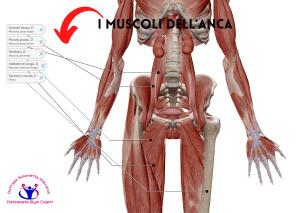simonetta-alibrandi-osteopata-posturologo-personal-trainer-dolore-allanca-I-muscoli-dellanca