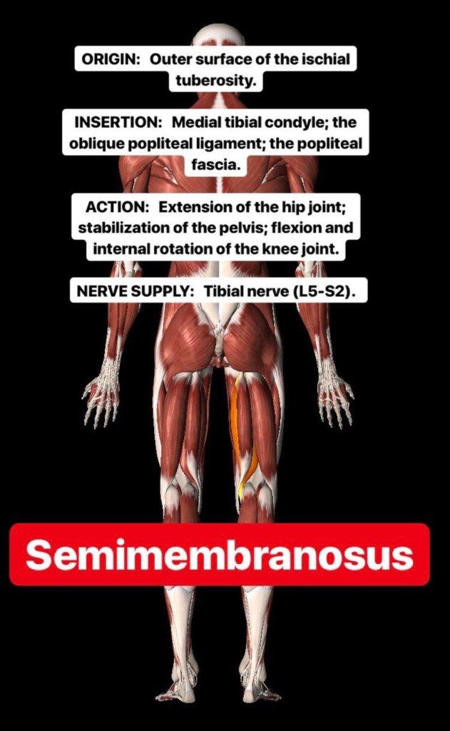 Simonetta-Alibrandi-Osteopata-personal-trainer-posturologo-mal-di-schiena-esercizi-corsa-stretching-ischiocrurali-femorali-fitness-Total body Postural Adjustment