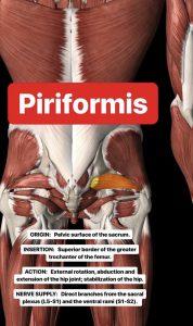 Simonetta-Alibrandi-Osteopata-personal-trainer-posturologo-mal-di-schiena-esercizi-lombalgia-piriforme-stretching-corsa-Total body Postural Adjustment
