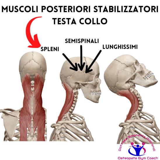 Simonetta-alibrandi-Osteopata-posturologo-personal-trainer-male-al-collo-vertigini-sbandamenti-cervicalgia-esercizi-efficaci-rimedi-rinforzo-posteriori Total body Postural Adjustment