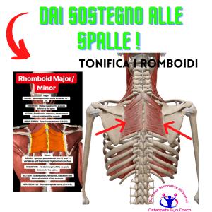 Simonetta-alibrandi-Osteopata-posturologo-personal-trainer-male-al-collo-vertigini-sbandamenti-cervicalgia-esercizi-efficaci-rimedi-romboid Total body Postural Adjustment