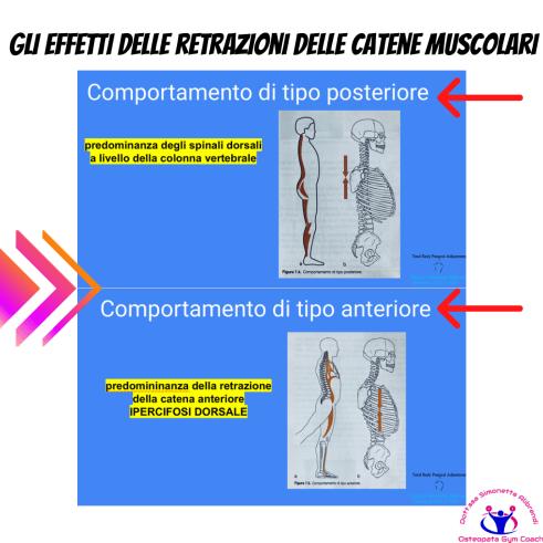 Simonetta-alibrandi-Osteopata-personal-trainer-posturologo-catene-muscolari-postura-corretta-Mezieres-esercizi-posturali-Total body Postural Adjustment