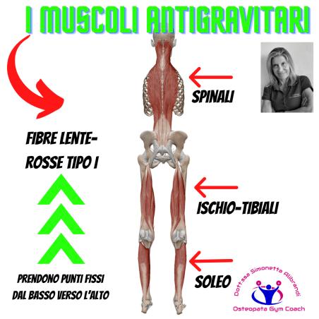 simonetta-alibrandi-osteopata-personal-trainer-postura-corretta-esercizi-muscoli-antigravitari.
