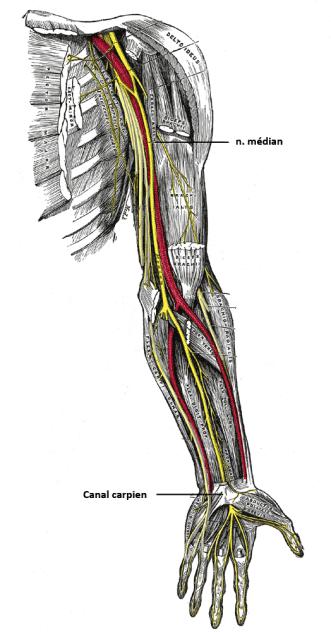 ostéopathe roubaix nerf médian
