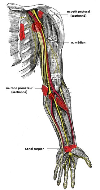 ostéopathe lille compression nerf médian