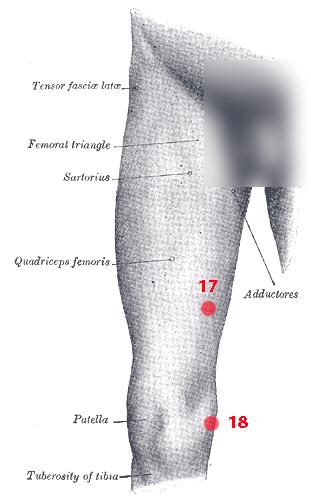 Points de Knap du membre inférieur