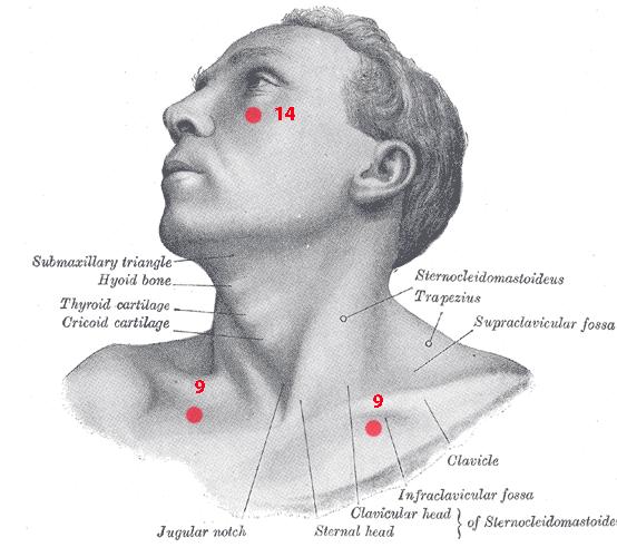 Points de Knap du cou et du visage - ostéopathe Castres