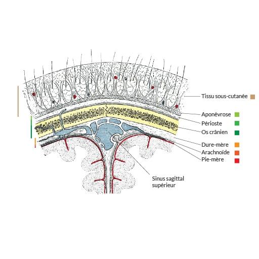 couches du crâne