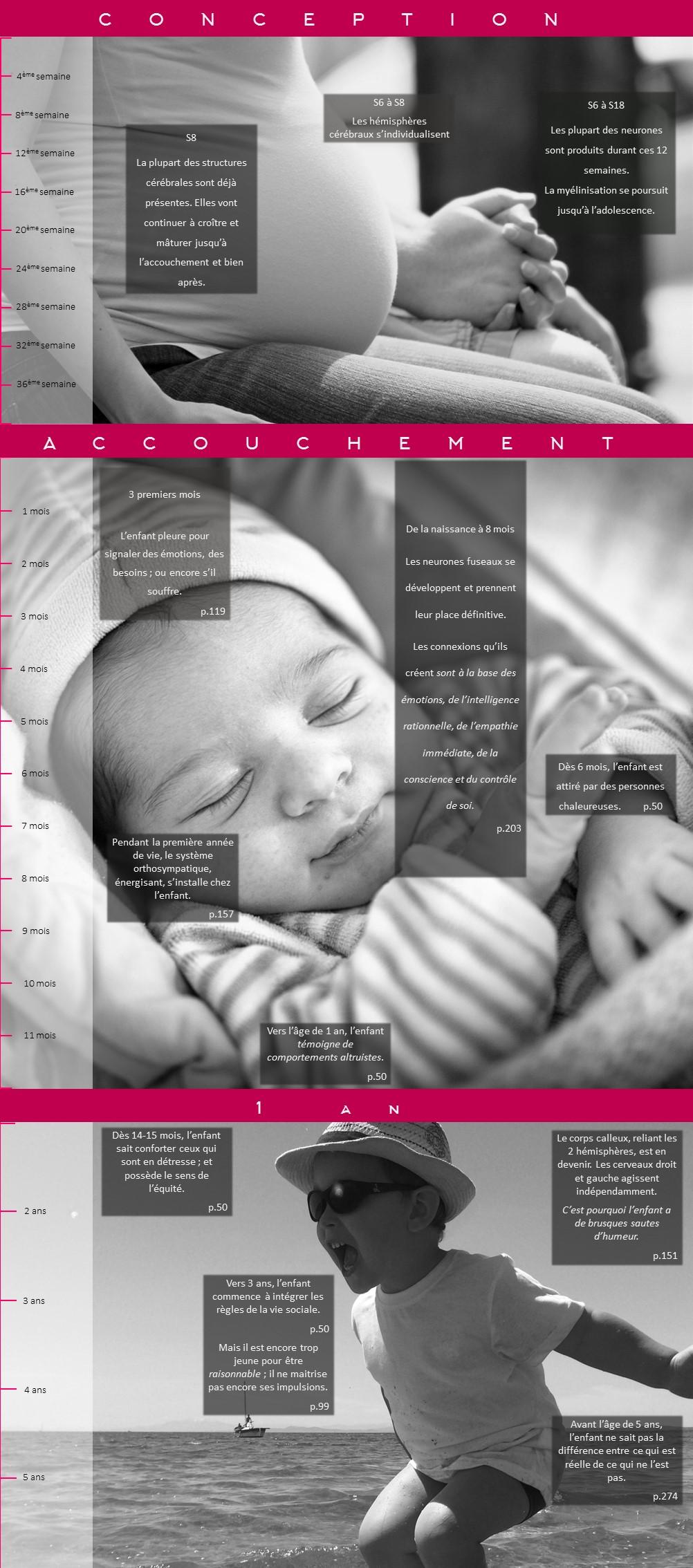 Frise chronologique de l'évolution du cerveau de l'enfant, d'après les données de Catherine Gueguen dans son livre Pour une enfance heureuse.