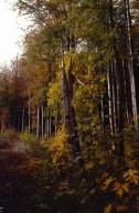 naturnahen Wald