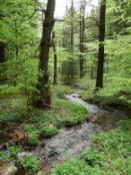 schmale Waldbachaue des Bärenbaches