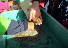 Samen wurden im Herbst gemischt (Foto: Kinderkrippe Ruppendorf)