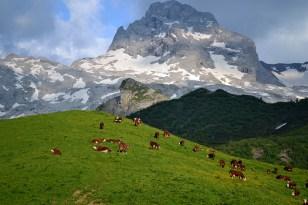 En eng i Alperne