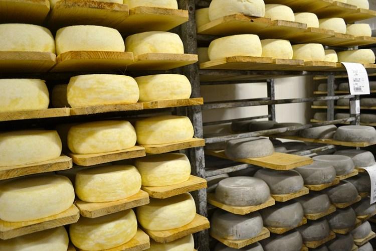 Tomme-oste modner