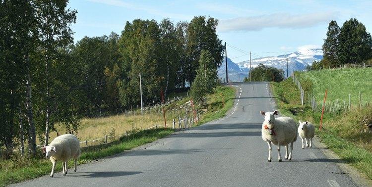 I Nordlandet