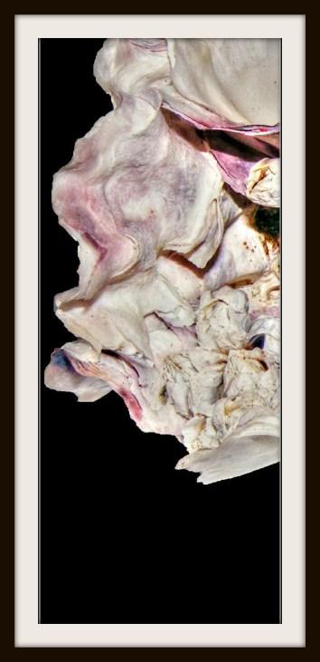 A close shot of an oyster shell.