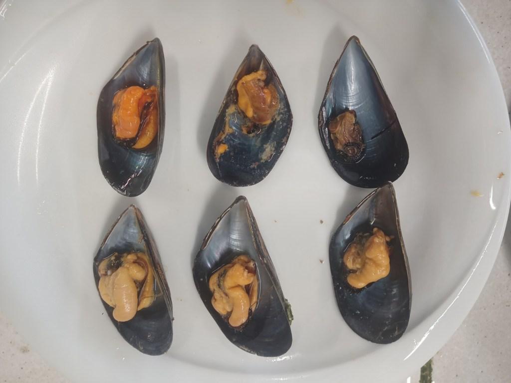 Moules de Thau cuite