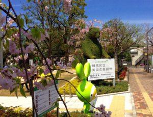 練馬区立美術館の庭園の桜