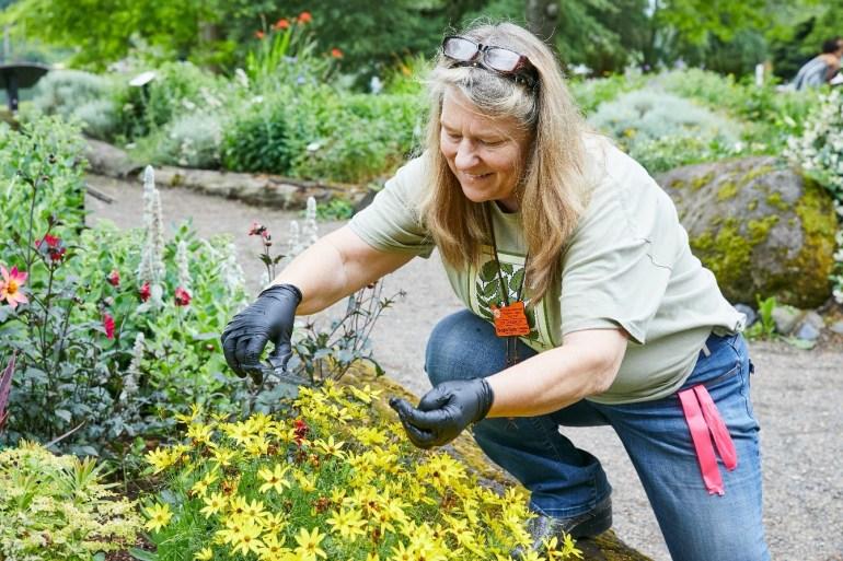 Master Gardener deadheads spent blossoms at Blue Lake Park Discovery Garden.