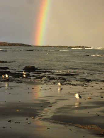 A rainbow over a third field site on Ano Nuevo Island, California