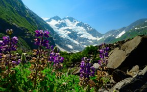 ALASKA GLACIER WILDFLOWERS ENVIRONMENT