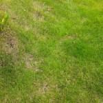 7月の芝刈り