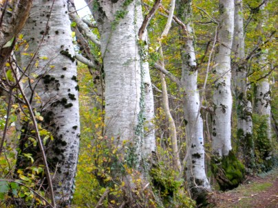 Sturdy trees hastening to winter