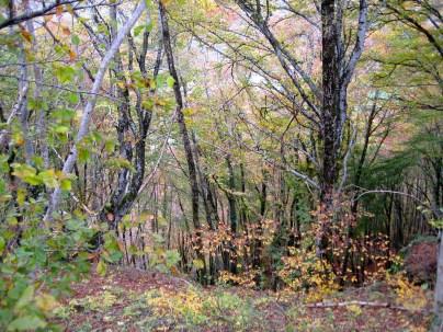 Leaves dancing in the brisk November wind