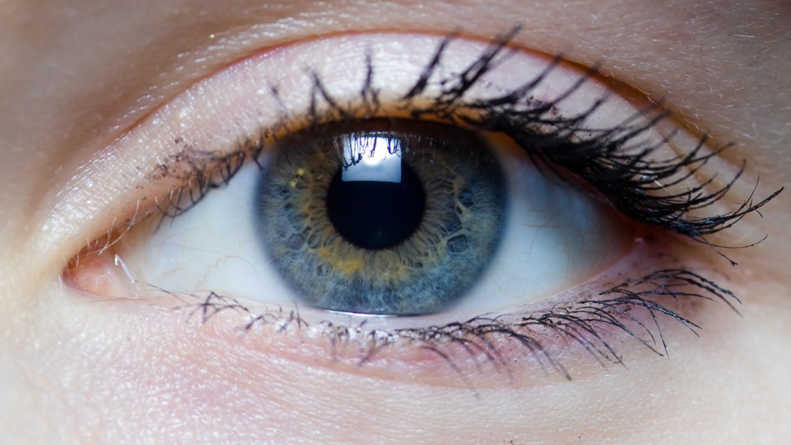 Brain plasticity after vision loss has an 'on-off switch'