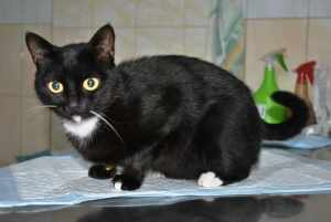 Бездомная кошка Совушка ищет дом