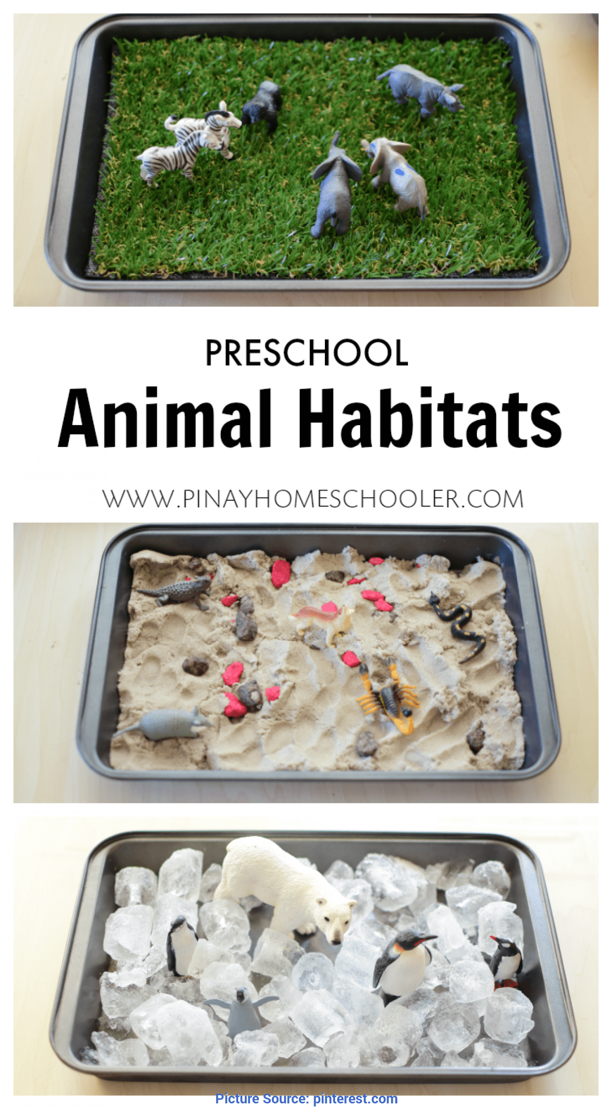Briliant Preschool Science Lesson Plans Zoo Animals Animal