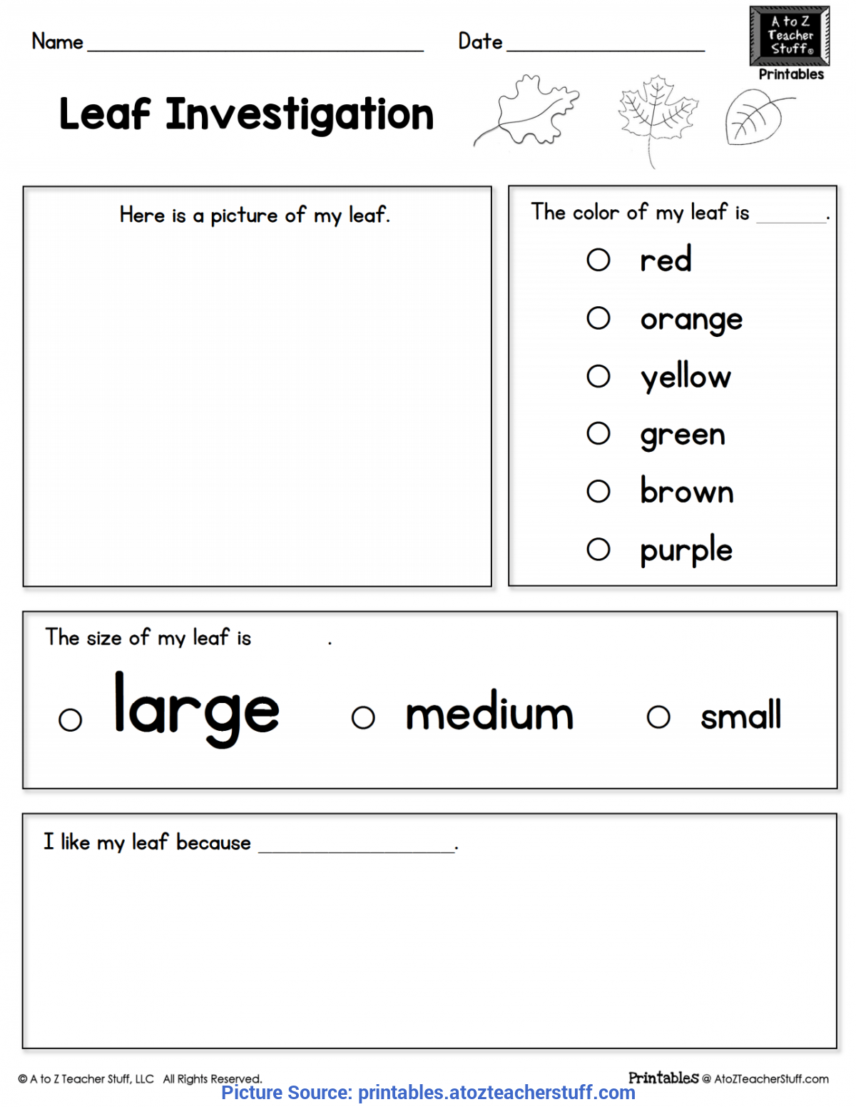 Complex Leaf Activities For Kindergarten Leaf